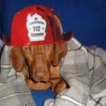 Heute hat mich mein Herrchen zum Feuerwehrhauptmann befördert